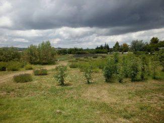 Ambiente: prima Oasi della Biodiversità in una discarica, progetto Sogenus-Università