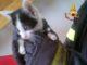 Recupero gatto, foto d'archivio