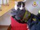 Recupero gatto, immagine d'archivio