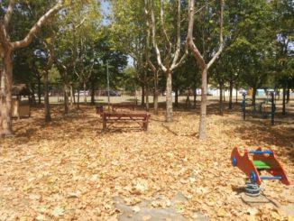 foglie secche estate