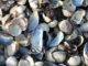 stockvault-shells104060