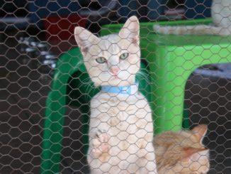 cat-269048_960_720