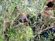 casa-olio-biodiversità