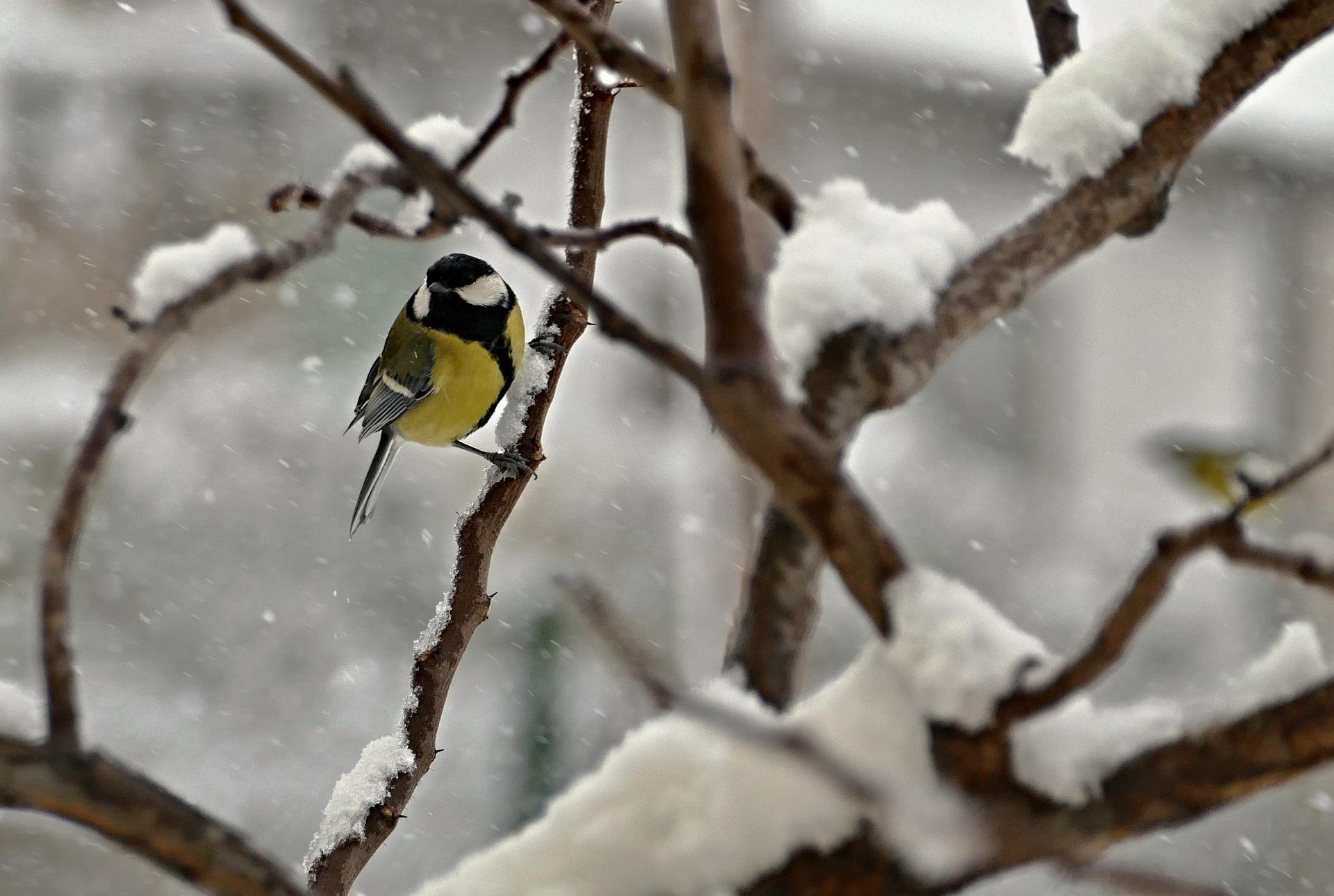 volatili neve