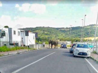 Elefante strada