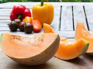 melon-1631569__480