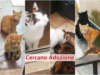 gatti adozione