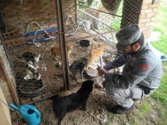 Gatti detenuti in gabbia