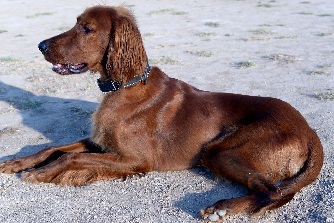 dog-3672735_1280