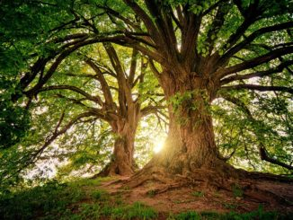 tree-3822149_960_720