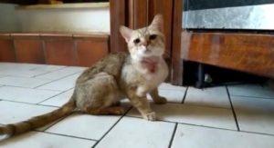 gatti prov ancona 2