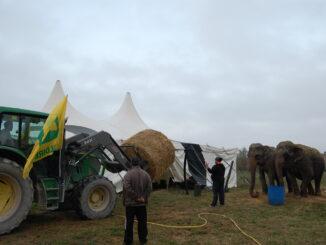 consegna circo fabriano (1)