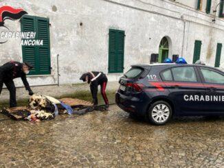 Carabinieri morro d'alba